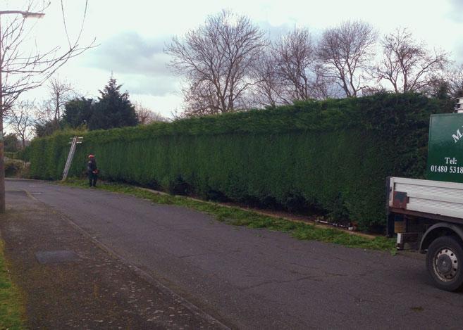 Hedge2