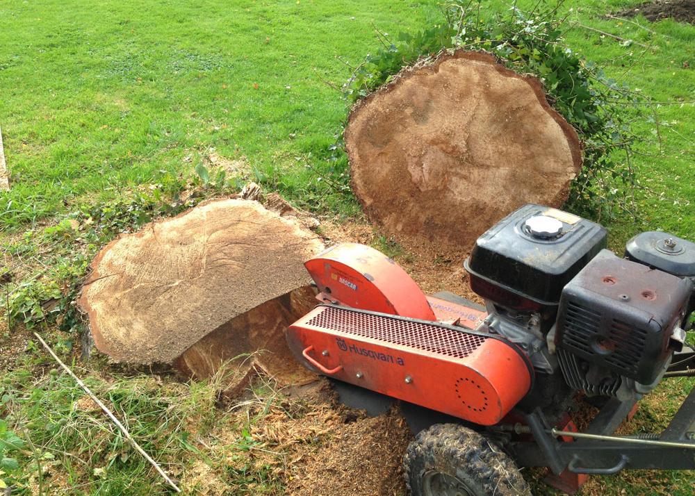 stump-1